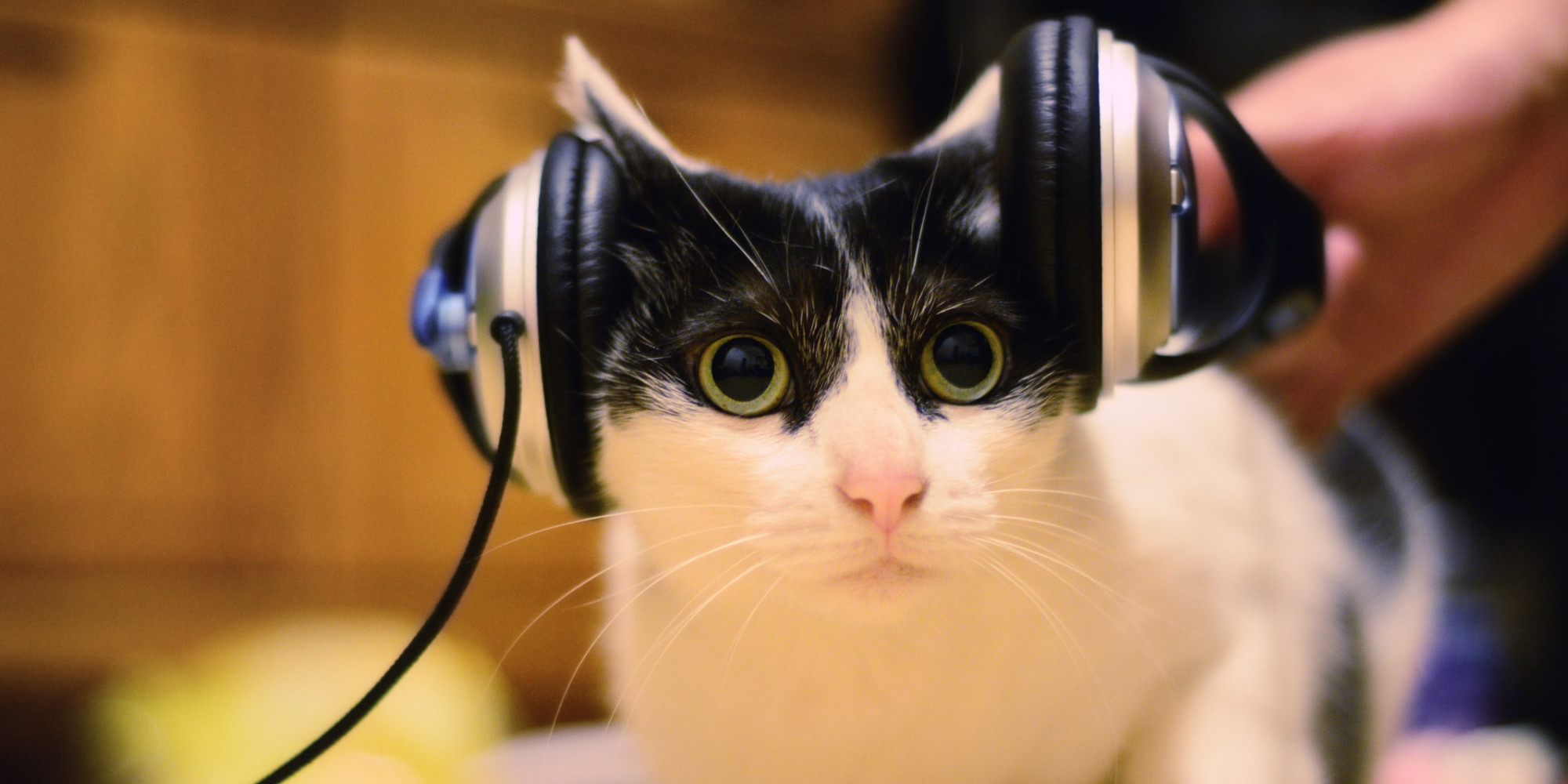 Cute cat with headphones
