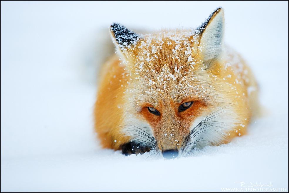 110707147-snoweater
