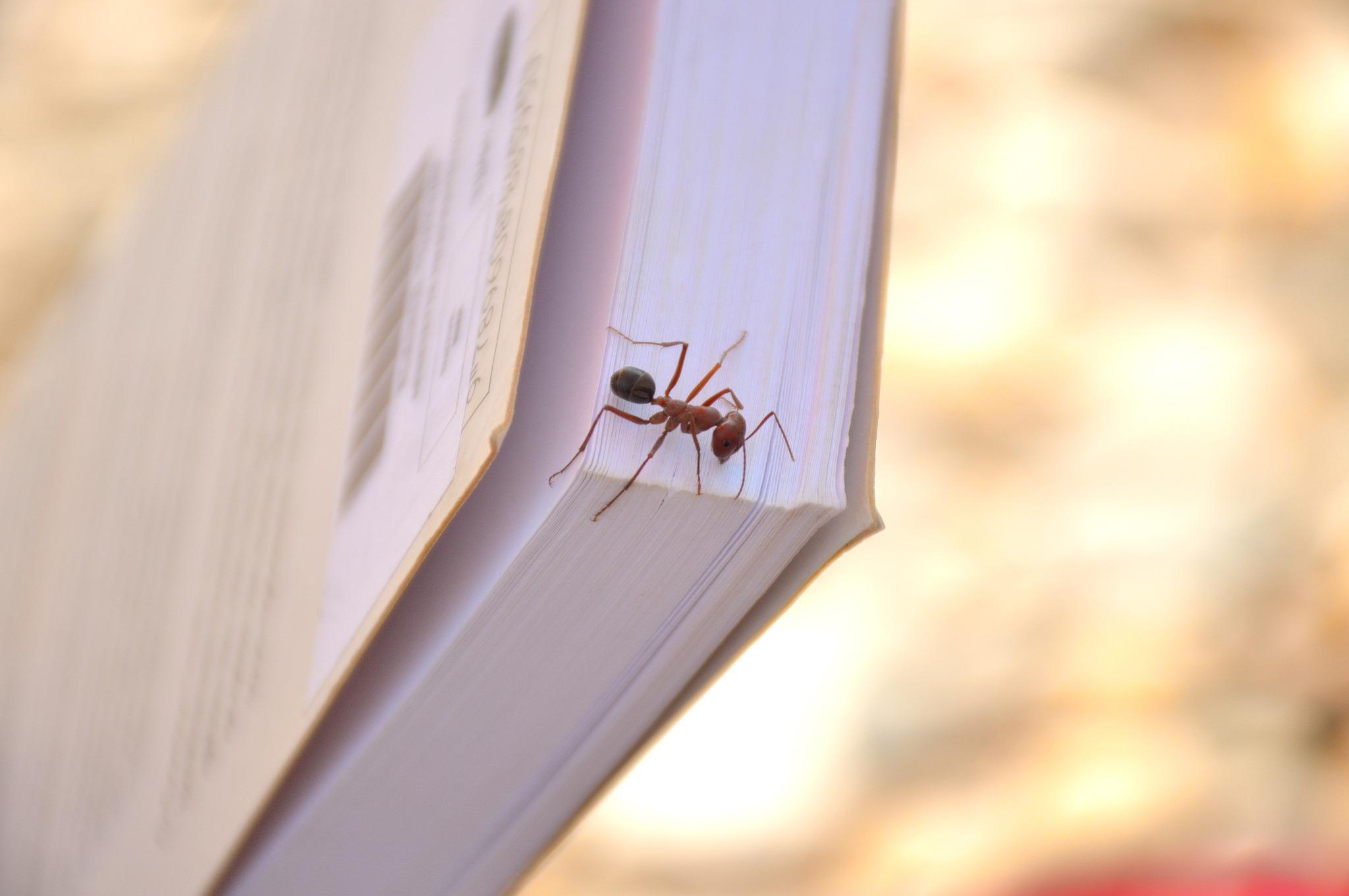 93408171-ant-reading