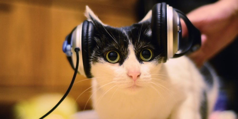 Cute cat with headphones