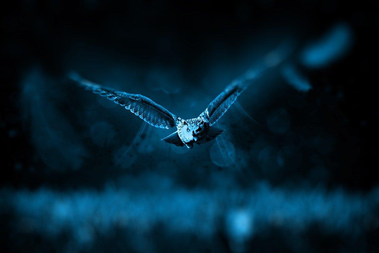 owl-hunt-nature-hunter-46248