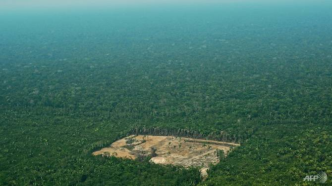 deforestation-western-amazon