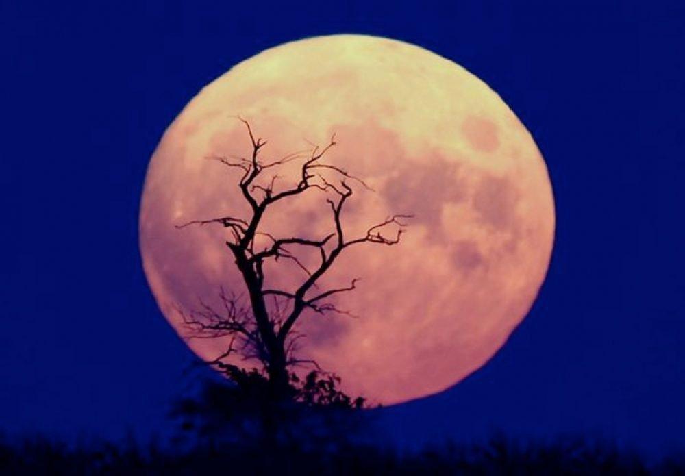 blue-moon-new-years-eve_11722_600x450