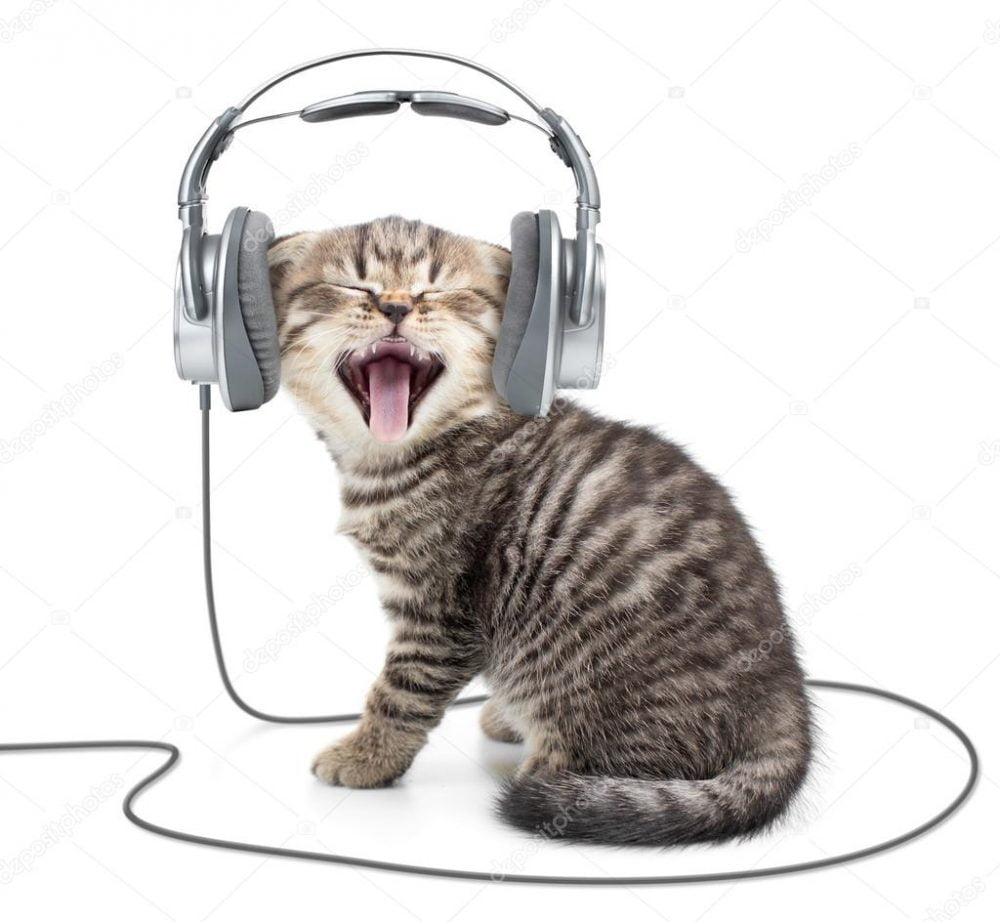 depositphotos_64727459-stock-photo-singing-kitten-cat-in-wired