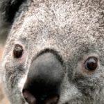 Profile photo of yên nhiên